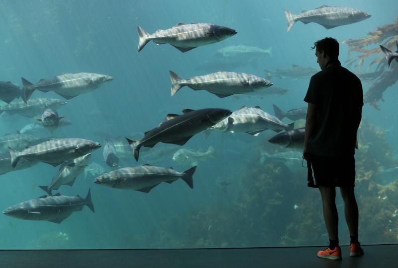 Fisk som svømmer i Atlanterhavsparken