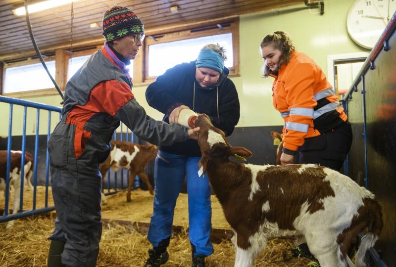 Elevar ved Gjermundnes vgs gir kalven mjølk